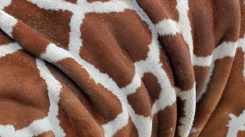 Una jirafa me habló