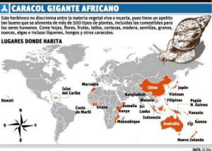 """El caracol gigante africano cruza """"medio mundo"""" con una turista"""