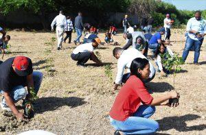 CORAASAN y juntas de vecinos siembran árboles en Cienfuegos