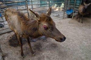 Imagen de Justicia y Dignidad Animal