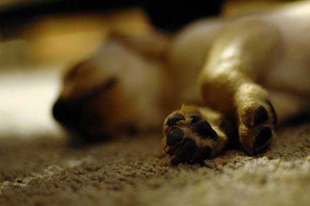 FUENTE: Las 7 Claves para Educar a un Cachorro con Éxito
