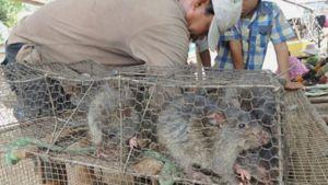 Prohíben ratas y otras especies comestibles en China