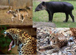 Ser humano, el causante de la extinción de 96% de mamíferos