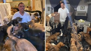 Rescatista da refugio de 300 perros por huracán Delta