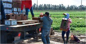 Campesinos y migrantes viven en condiciones cercanas a la esclavitud