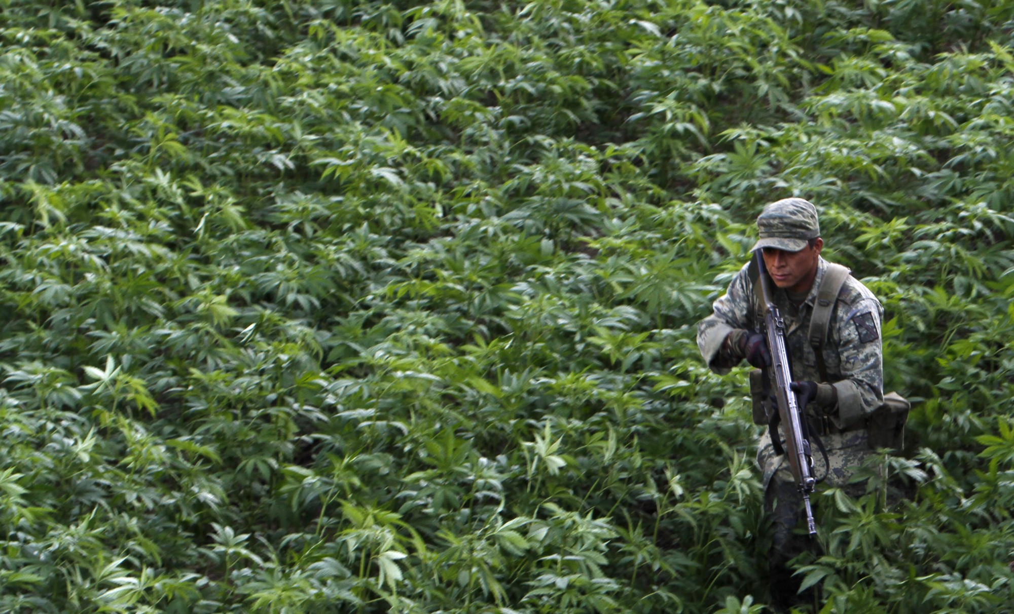 Un soldado del ejército mexicano en un campo de marihuana en Culiacán, Sinaloa.