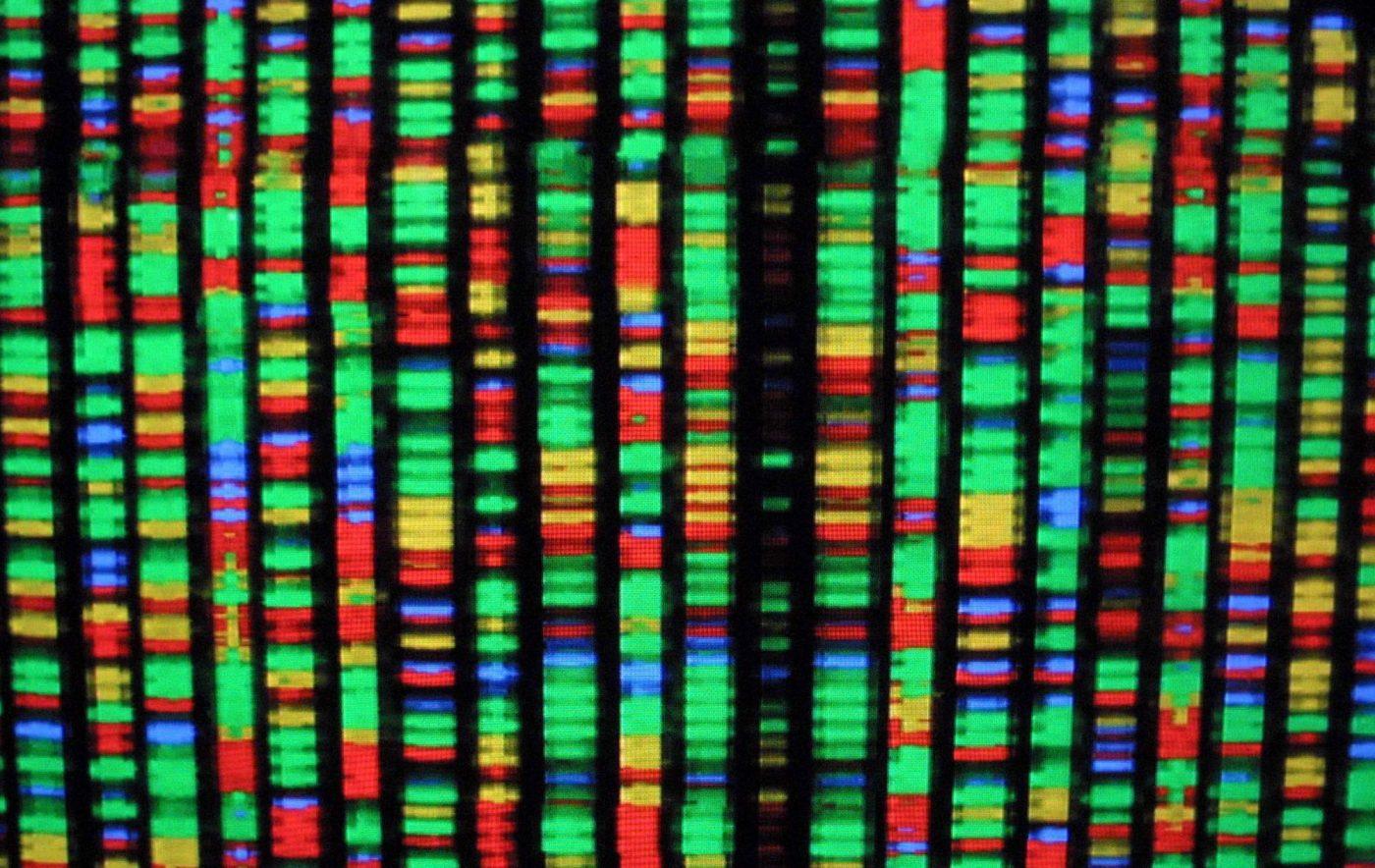 Una representación digital del genoma humano en el Museo de Historia Natural de Nueva York en el año 2001.