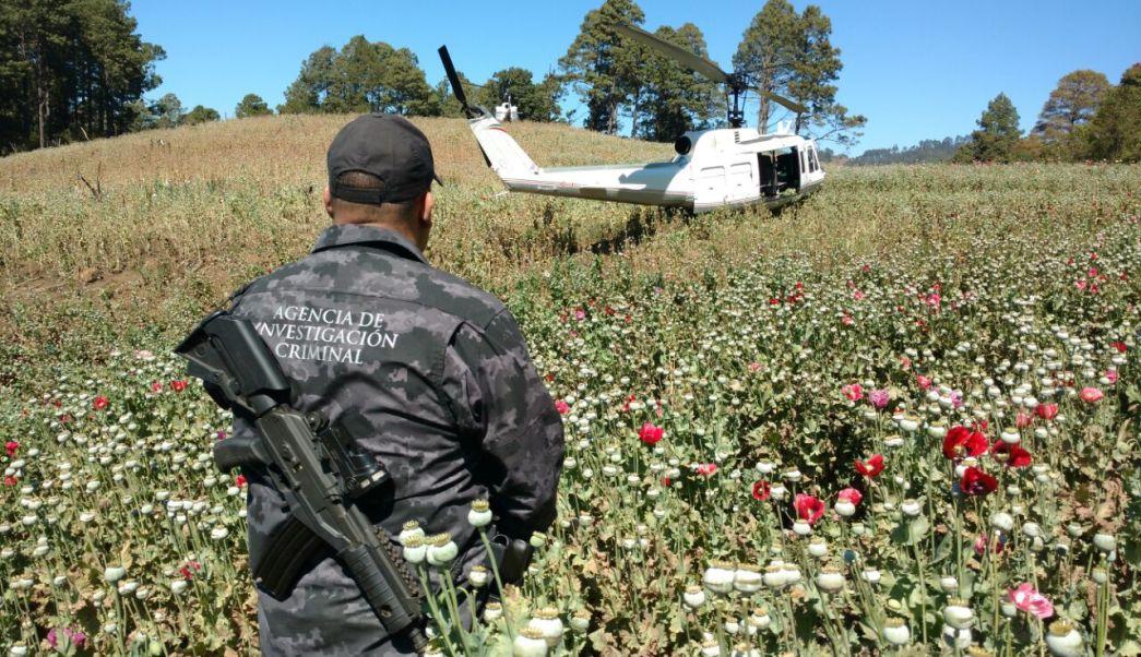 Autoridades federales resguardan un plantío de amapola en Santiago Textitlán, Oaxaca; destruyen más de 300 mil plantas de la especie (PGR)
