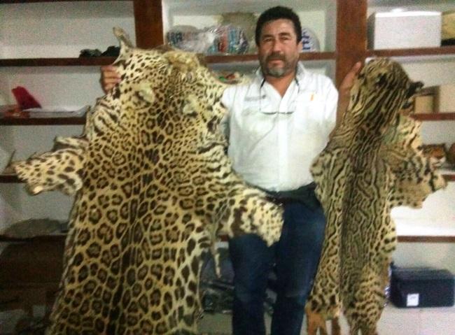 Profepa decomisa pieles de animales en peligro de extinción