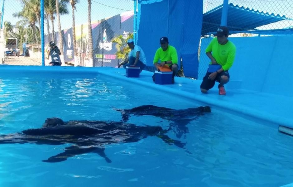 Traslado de lobos marinos a delfinario de Nayarit