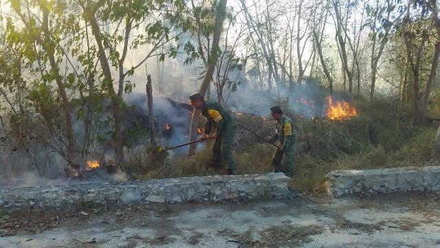 Militares combaten incendio forestal en Yucatán (Sedena)