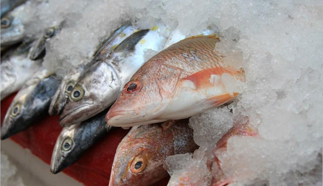 Diferentes especies de pescado que se expenden en México; los comerciantes se dicen listos para la temporada de Cuaresma y Semana Santa 2017 (Sagarpa)