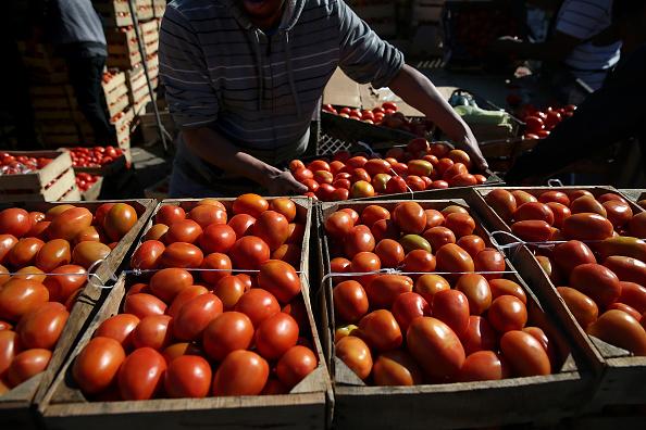 Productores oaxaqueños esportarán jitomate a Estados Unidos (Getty Images)
