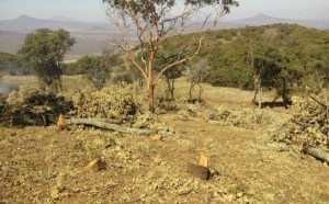 Detienen a ocho presuntos talamontes en Michoacán