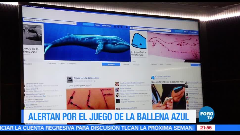 Fotos y videos de la ballena azul 8
