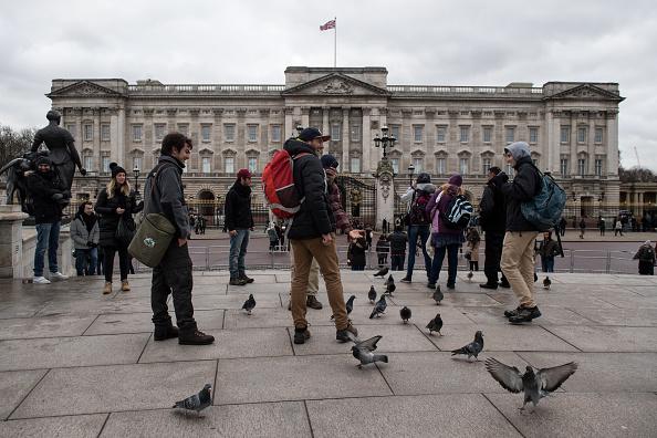 Turistas alimentan a las palomas frente al palacio de Buckingham (Getty Images, archivo)