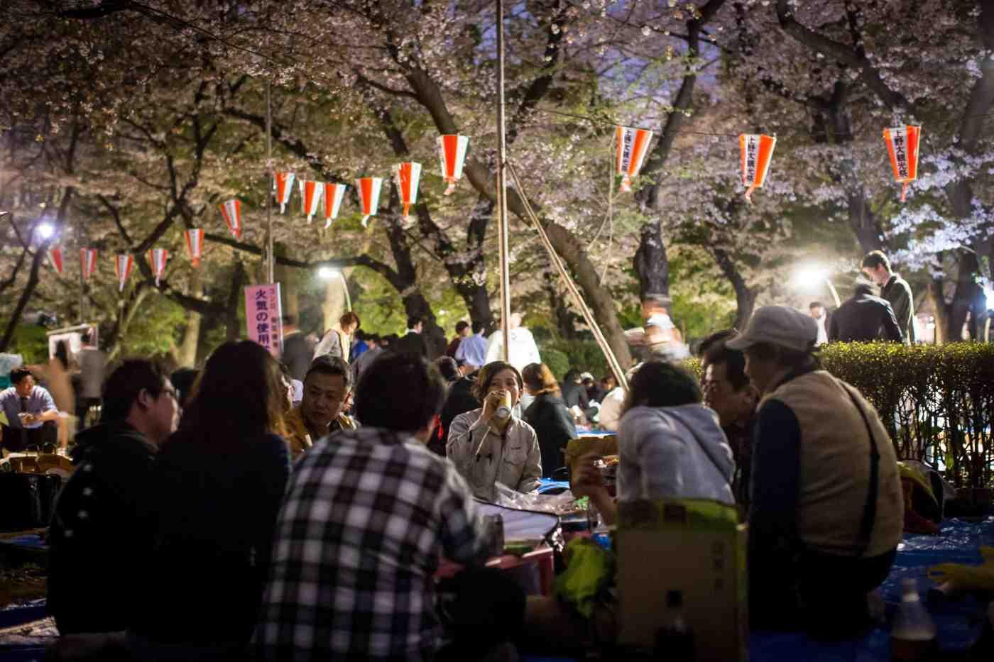 ohanami, hanami, flores de cerezo, japón