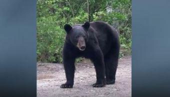 De momento la senda del paseo sigue abierta a pesar del encuentro con el animal (Twitter/Las Noticias MTY)
