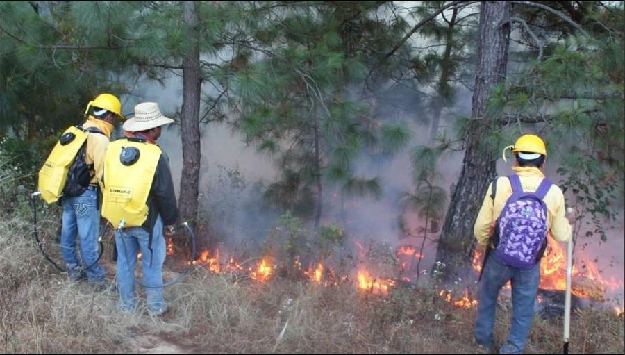 Realizan quema controlada en bosques de Guerrero; miles de incendios han afectado más de 26 mil hectáreas en México en el 2017( Twitter @CONAFOR)