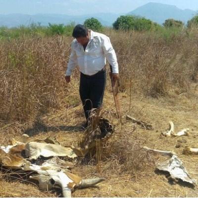 Declaran emergencia por sequía en varias cuencas de México