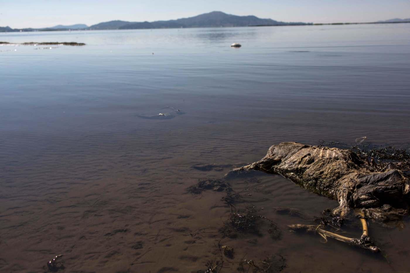 El esqueleto de una oveja yace en la orilla del lago Titicaca, Perú. Según activistas medioambientales, el ganado y los cultivos de los residentes mueren a causa de la contaminación. (AP)