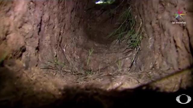 La longitud del túnel, según las autoridades, es de 40 metros de largo. (Noticieros Televisa)