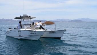 Aseguran dos embarcaciones por observación y nado ilegales con tiburón ballena en BCS. (Profepa)