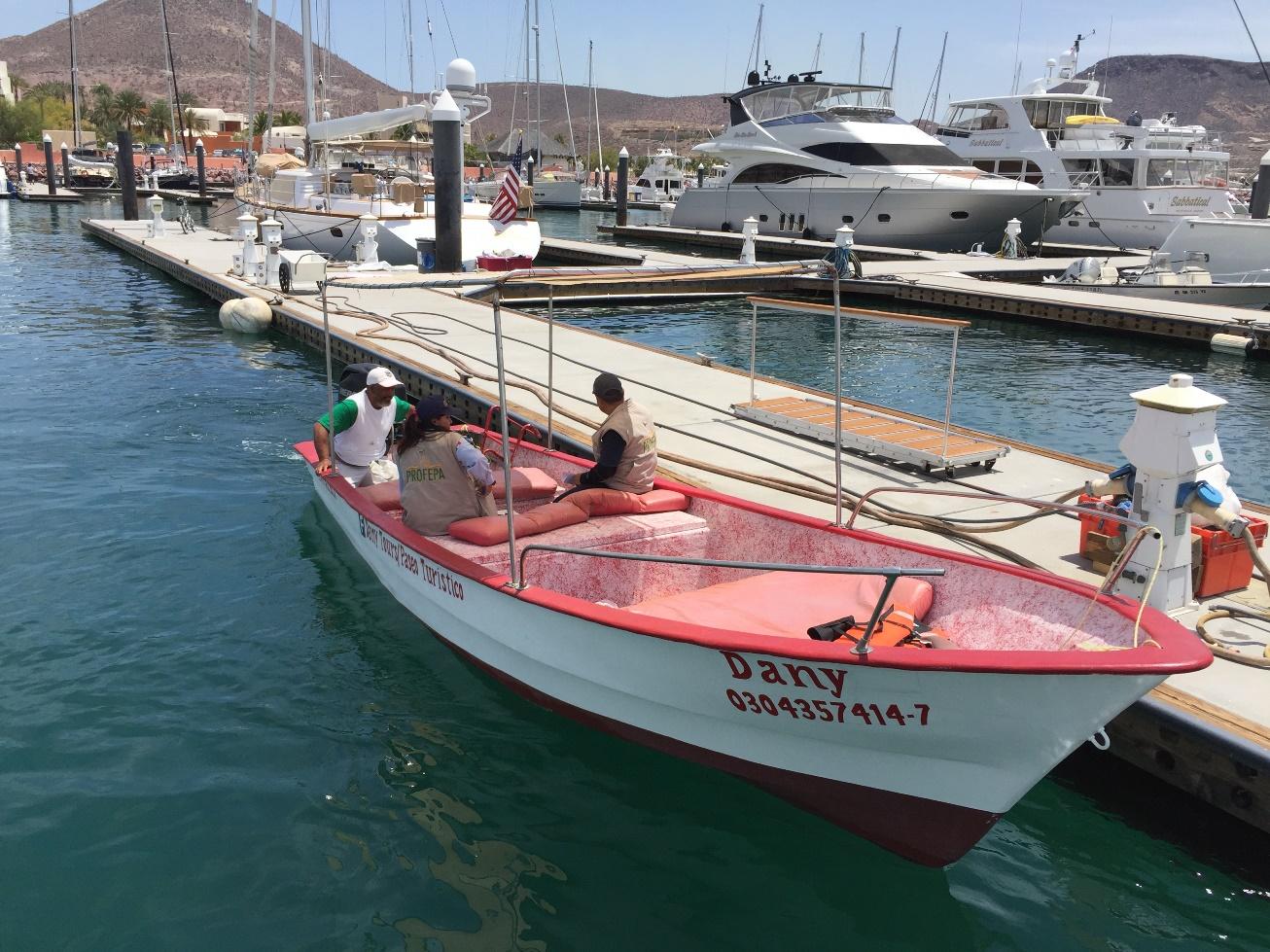 Aseguran dos embarcaciones por observación y nado ilegales en BCS. (Profepa)