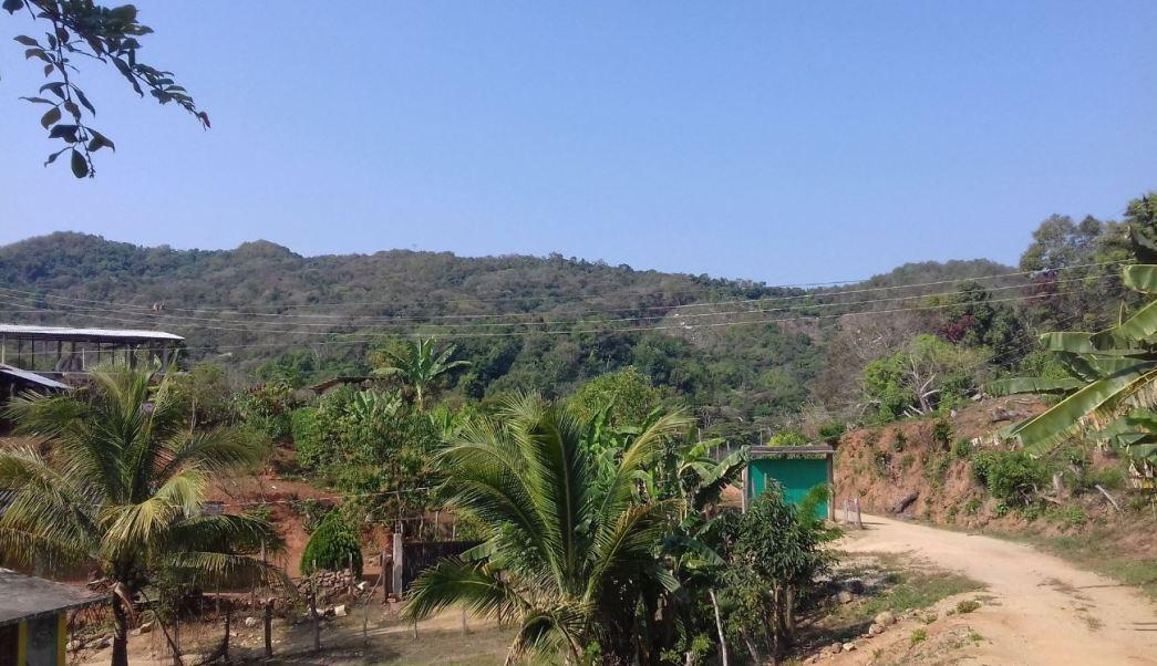 Las autoridades del medio ambiente en Guerrero trabajan en un proyecto para reforestar la zona afectada (Twitter/@LuisAlf51588690)