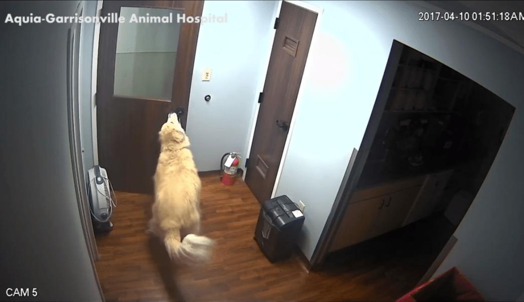 general-perro-abrir-puerta-escape-veterinaria