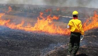 Incendio forestal en Ejido La Laguna, Zacatecas (Twitter @CONAFOR, archivo)