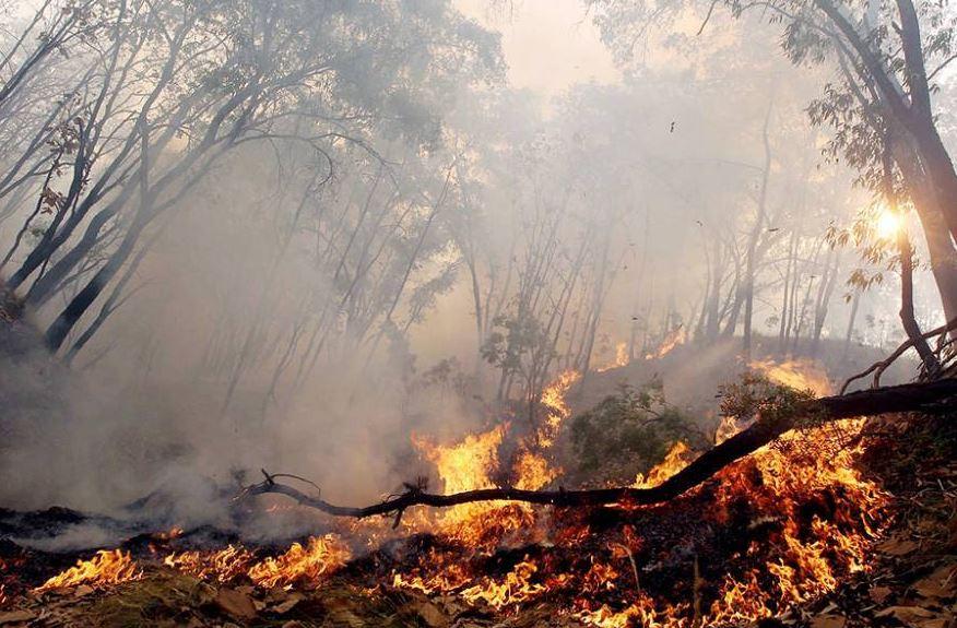 La Ciudad de México se ubica en tercer lugar entre las entidades con más incendios forestales. (@ORGDEBOMBEROS)