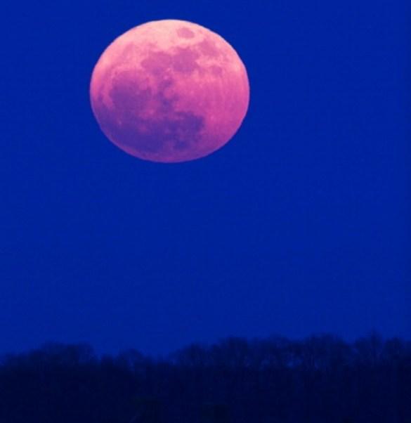 En el hemisferio norte, la luna llena de abril se alinea con la floración de una de las plantas de la primavera: phlox silvestre (o musgo rosado) (Getty Images)