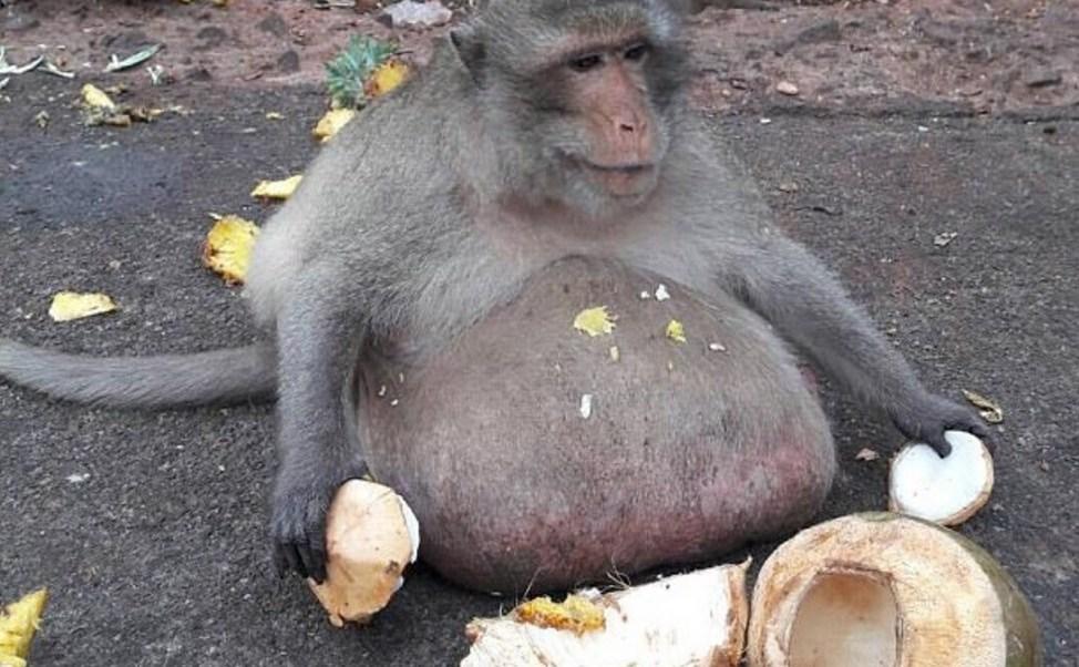 """El """"Tío Fatty"""" fue rescatado y llevado para un chequeo (dailymail)"""