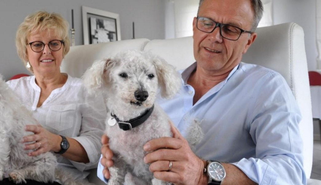 'Topaze' vuelve a casa tras 11 años de estar desaparecido (Foto: lavoixdunord.fr)