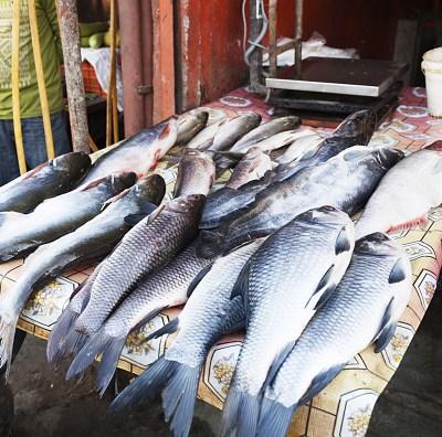 Recomendaciones para el consumo de pescados y mariscos en la CDMX