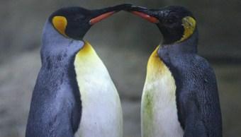 Científicos han encontrado que más de 450 especies de animales muestran comportamiento gay (Getty Images)
