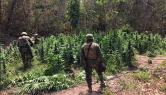 Elementos del Ejército y la PF aseguraron siete plantío de amapola y marihuana en Guerrero. (Twitter @GuerreroComSoc)