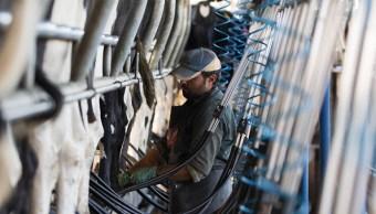 El comercio y producción de leche en Canadá es blanco de Donald Trump. (Getty Images)