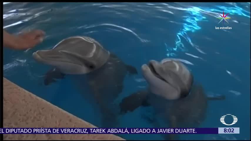 Prohíben los delfinarios en México