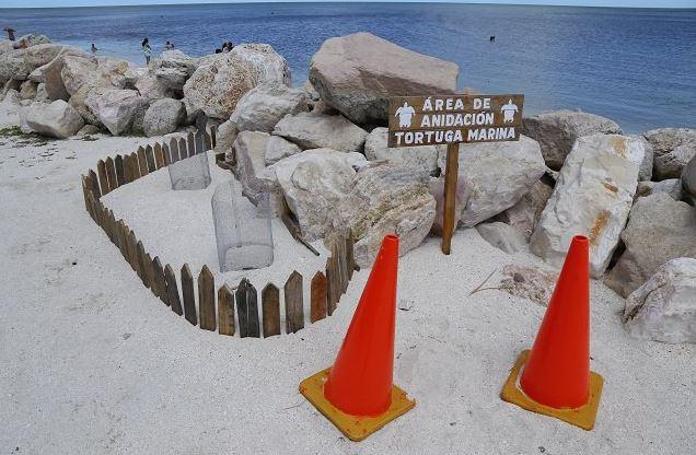 Tortugas, Campeche, Marinas, Desove, Ecologia, Noticias