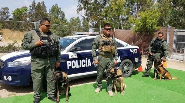 Unidad Canina de la Policía Municipal de Tijuana. (uniradioinforma.com, archivo)