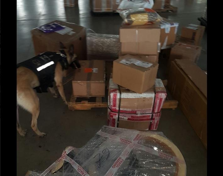 Escuadrón canino de la Fiscalía de Jalisco encuentra arma y droga. (Twitter @FiscaliaJal)