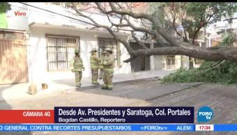 Bomberos, Fuertes vientos, derriban árboles, Ciudad de México