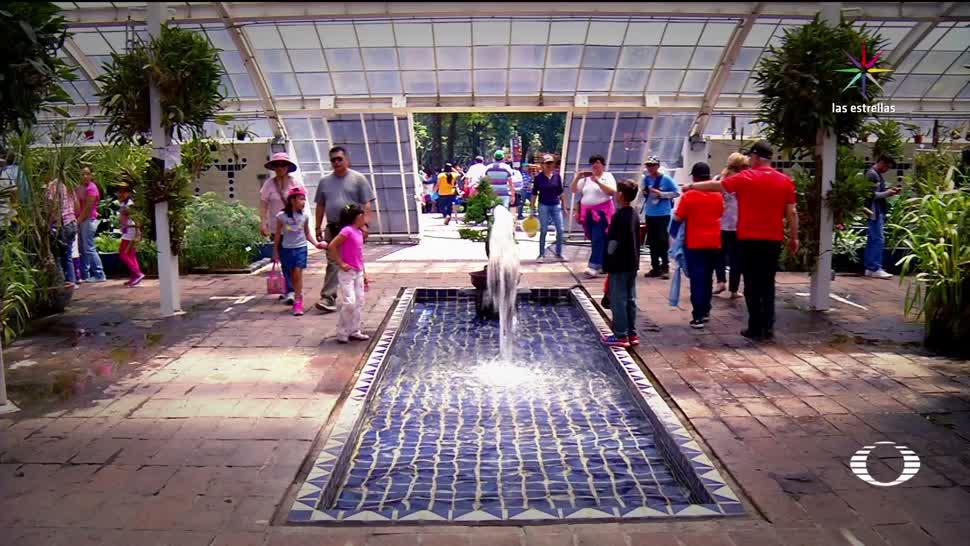 Festival de Flores, Jardines, CDMX, Festival de Flores y Jardines de la Ciudad de México