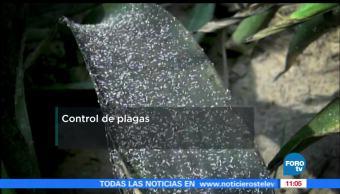 UNAM investiga, plaguicidas, entorno, autoridades sanitarias en México
