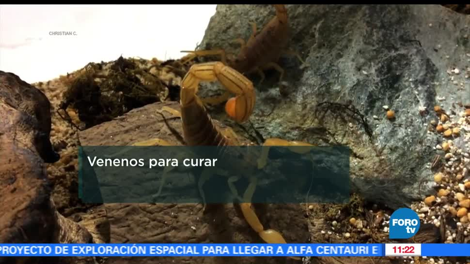 UNAM, doctor Lourival Possani, picaduras del alacrán, disminuir los efectos