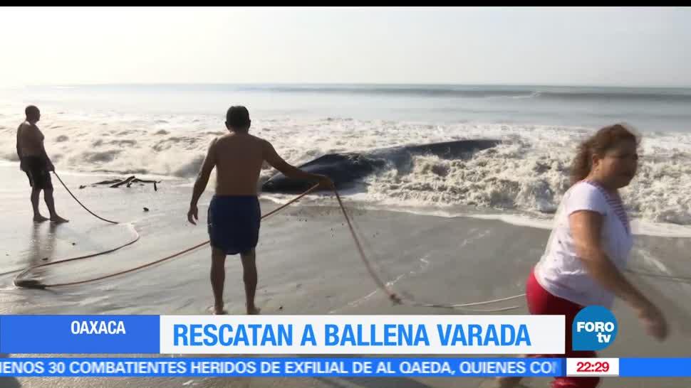 Rescatan, ballena, varada, costas, Oaxaca, Salina Cruz, la ventosa
