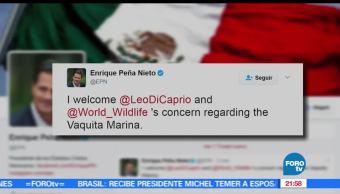 EPN, Responde, Instagram, Leonardo DiCaprio, Vaquita Marina, Twuit