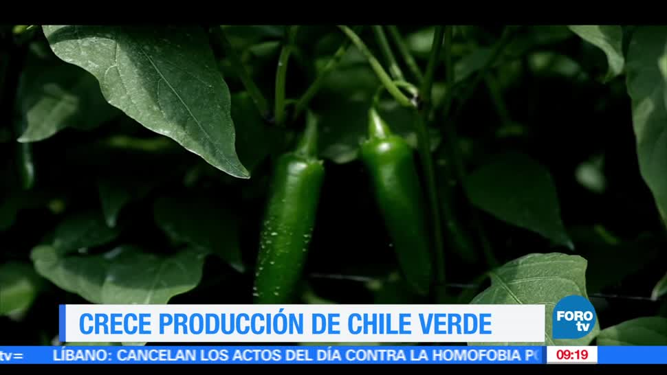 producción de chile verde, México, toneladas, informó Sagarpa